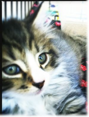 """Why A """"Free"""" Kitten Really Isn't Free – Save Money By"""