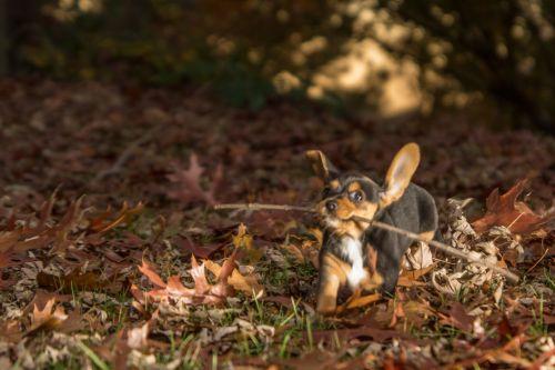 https://photos.petfinder.com/photos/US/GA/GA612/24825229/GA612.24825229-2-x.jpg
