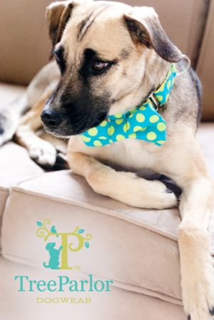 Beautiful Dog Bridget