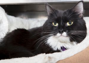 . Bootsie-Wants to be your only princess.  Meet her at Petsmart Manchester .