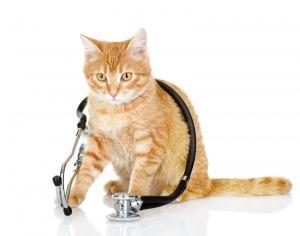 . HOSPICE CATS .