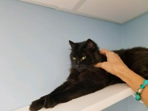 . Nate-Looking for a laid back kitty friend and a cat savvy owner .