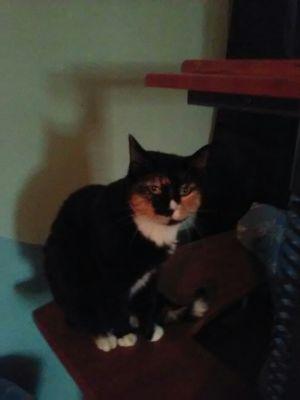 Photo of Marcie