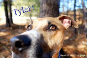 . Tyler .