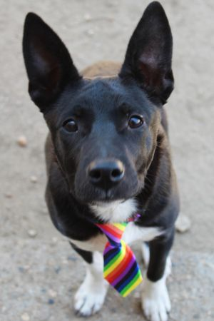 . Uno in NH Partially Sponsored Adoption Fee .