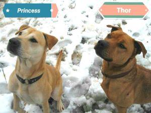 . Princess and Thor .