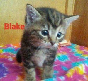 . Blake .