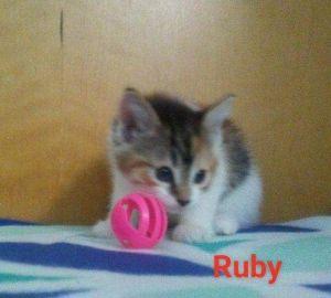 . Ruby .
