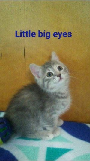 . Little Big Eyes .