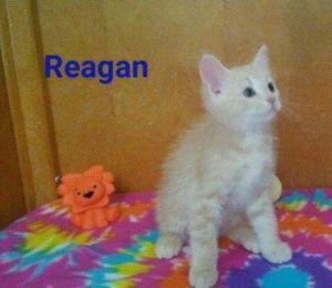 . Reagan .