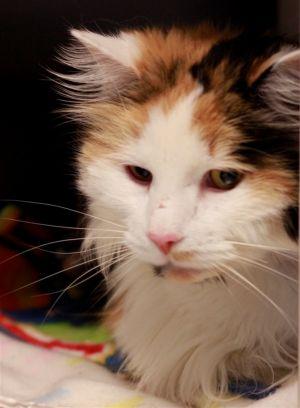 . Pretty Kitty .