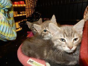 . Aggasiz and Fremont- at Petsmart .