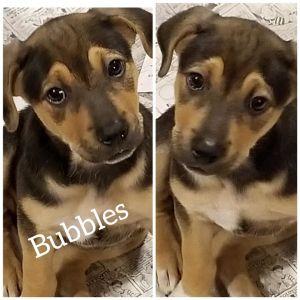 Photo of Bubbles Dd