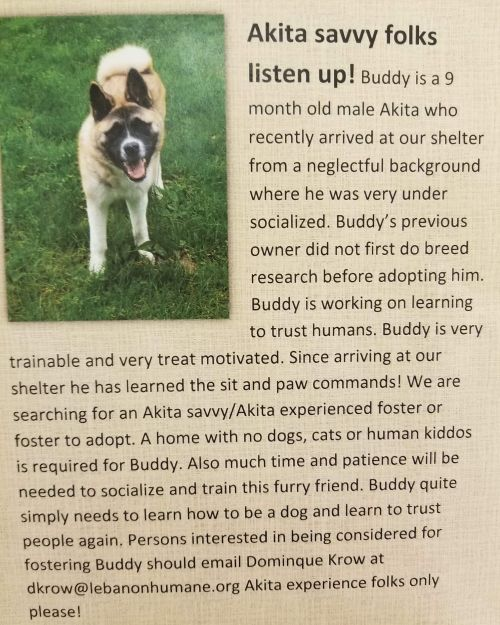 . Buddy - Courtsey Post .