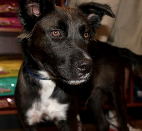 Photo of Hush Puppyjum
