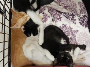 . Tang, Crush, Oreo, Tuxedo, Calica- at Petsmart .
