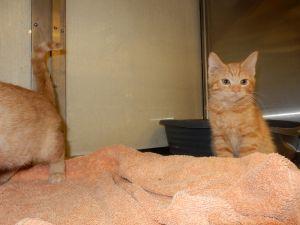. Callie and Stan- at Petsmart .