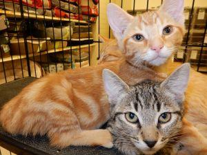 . Charity, Charles, and Cameron- at Petsmart .