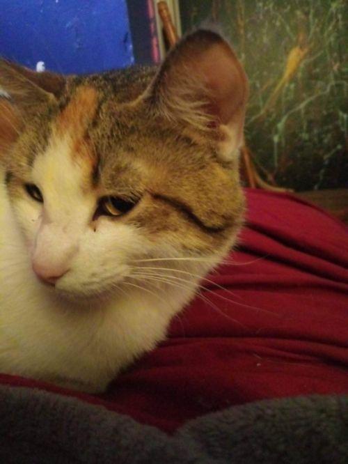 Photo of Gracie