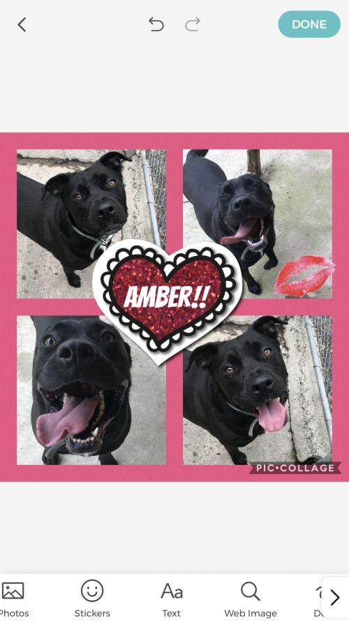 . Amber .