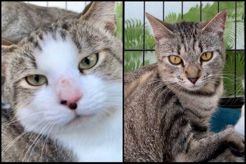 . Gozer (male) & Zuul (female) .