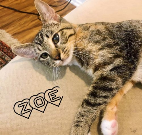 . Zoe (formerly Jack) .