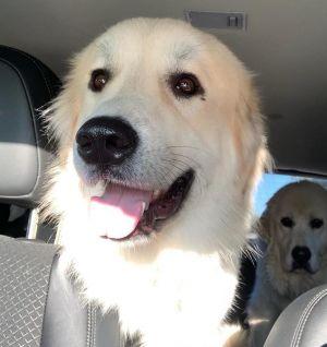 . Yeti - Adopted! .