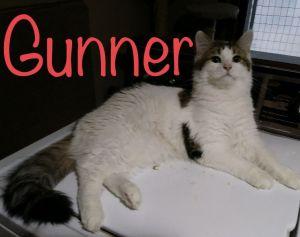 Photo of Gunner