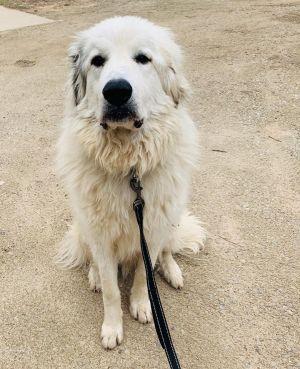 . Hudson - Adopted! .